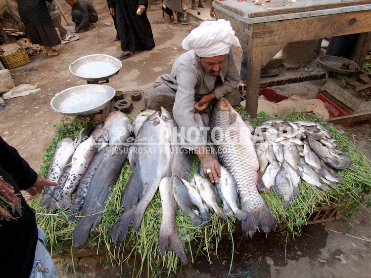 Picture of an Egyptian man with local attire and headscarf selling big fish on the floor.