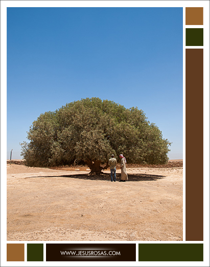 Picture of the tree and two men