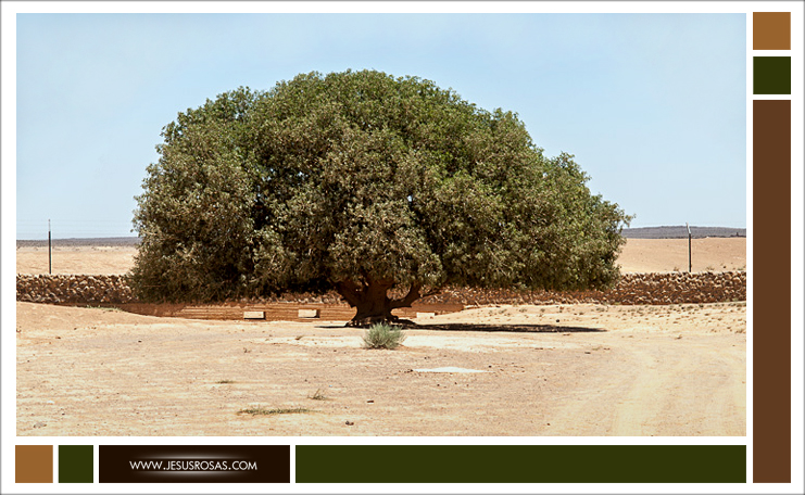 Picture of sahabi tree here