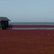 Red Beach-5