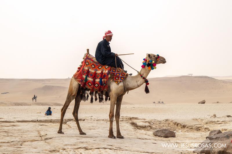 It is common to see several men offering camel rides to tourists around the Giza Pyramid.  This man is one of them; notice his outfit. He is wearing a galabiya, a traditional Egyptian robe.