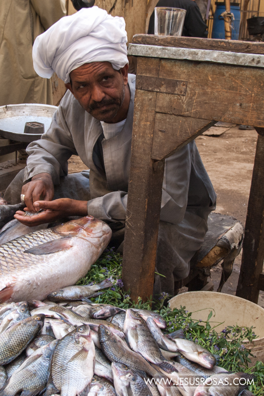 Fish vendor. Luxor, Egypt. 2009.