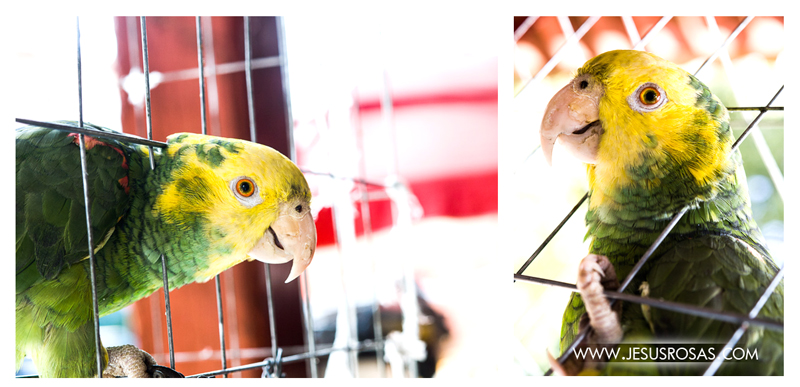 Two images of the same parrot.