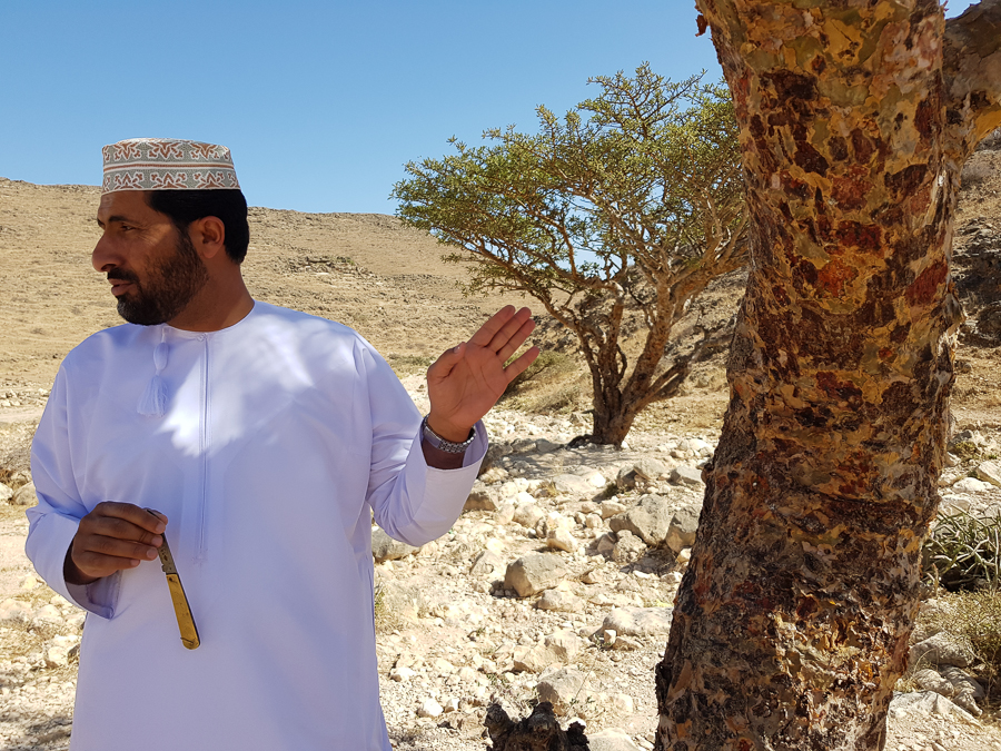 This Omani man showed my friend and me how frankincense is collected. Oman has a UNESCO World Heritage site called Land of Frankincense. The area is proud of their Frankincense heritage as one of the main activities in the ancient and medieval times.